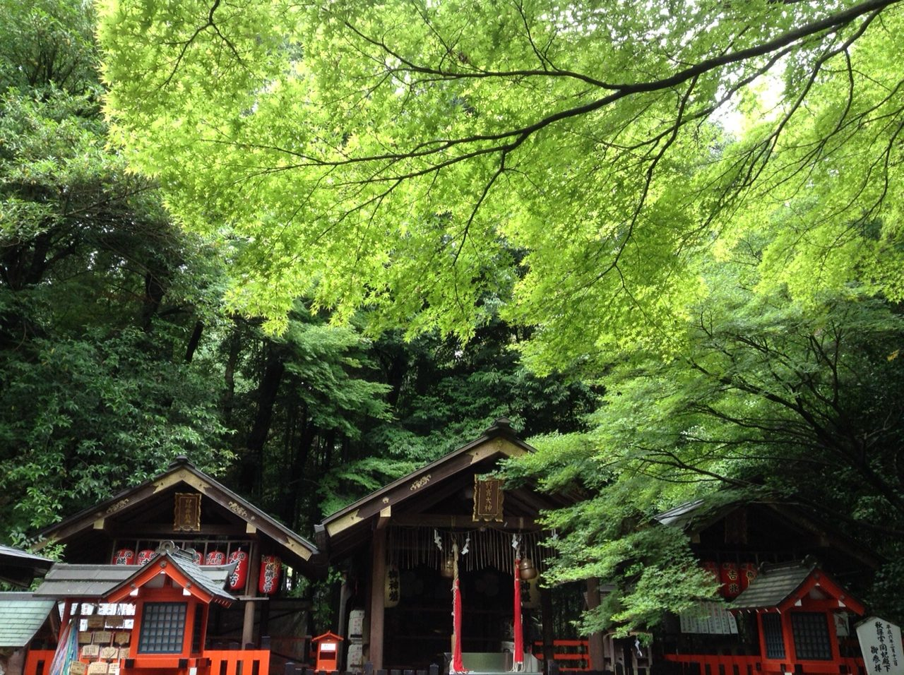 The lush of greenery at Nonomiya shrine.