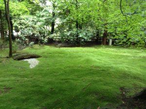 青々と苔むしたお庭。