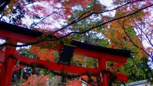 Oharano Trii gate